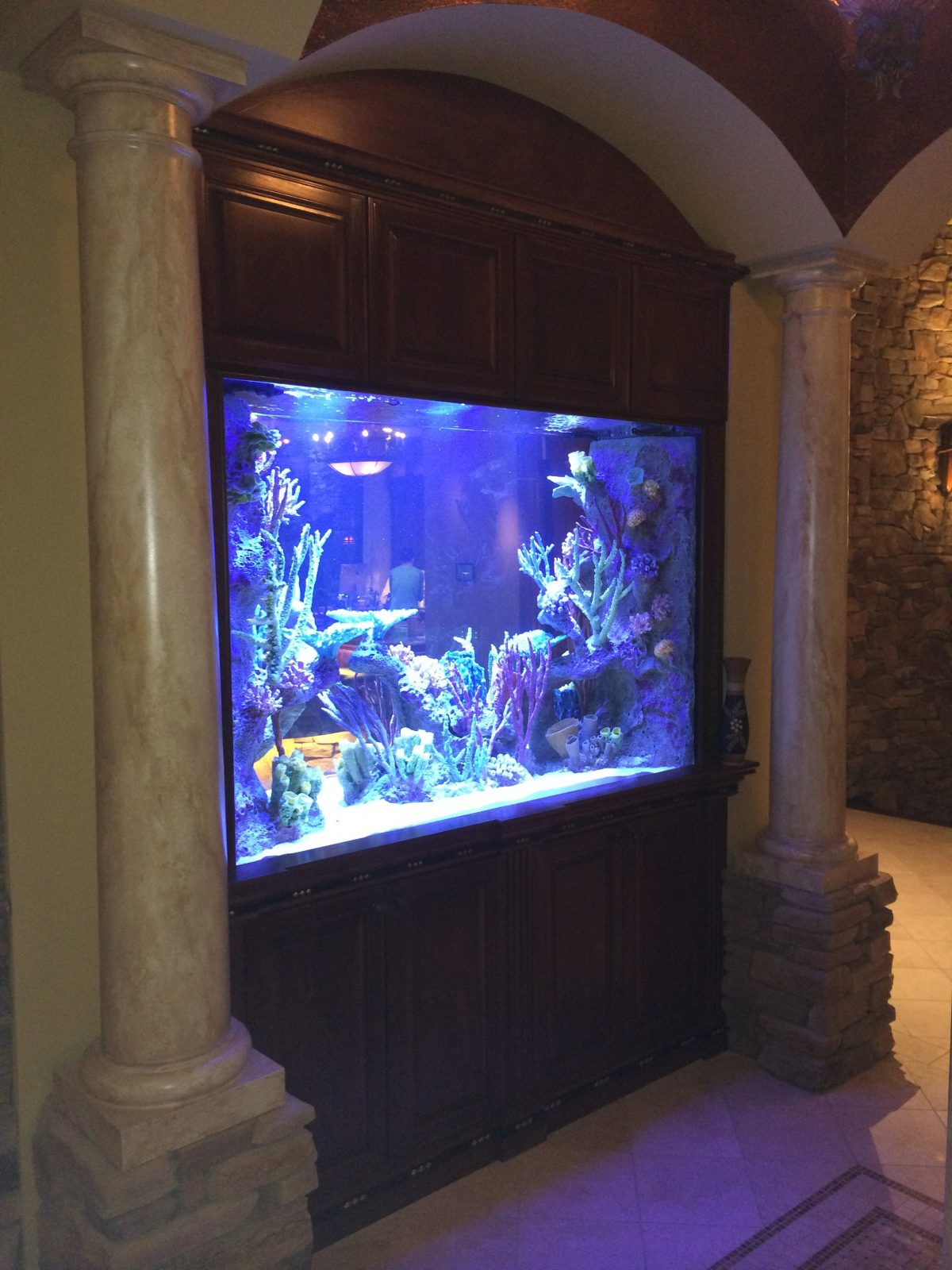 titan aquatic exhibits makers of fine acrylic aquariums custom fish tanks residential and. Black Bedroom Furniture Sets. Home Design Ideas