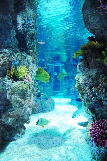 coralpic titan aquatic p009 titan aquatic exhibits. Black Bedroom Furniture Sets. Home Design Ideas