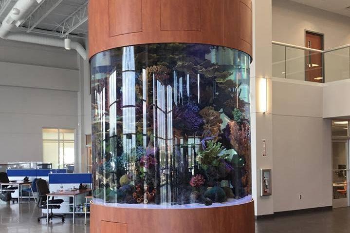 3000 Gallon Cylinder Aquarium