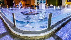 Custom Fiberglass Aquarium Built For The Odysea Aquarium In Scottsdale, AZ