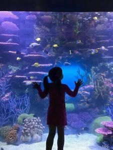 Custom Fiberglass Aquarium Built For The Florida Keys History & Discovery Center